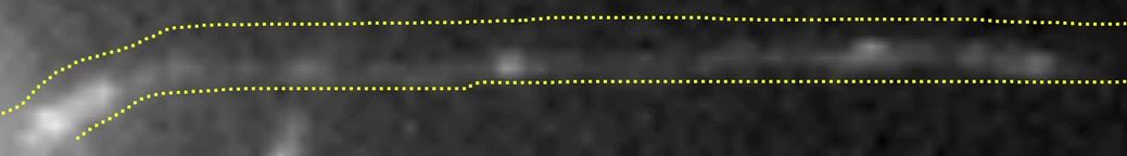 Control of vertebrate intraflagellar transport by the planar cell