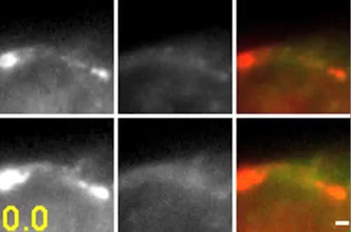 Using multifocal plane microscopy to reveal novel trafficking