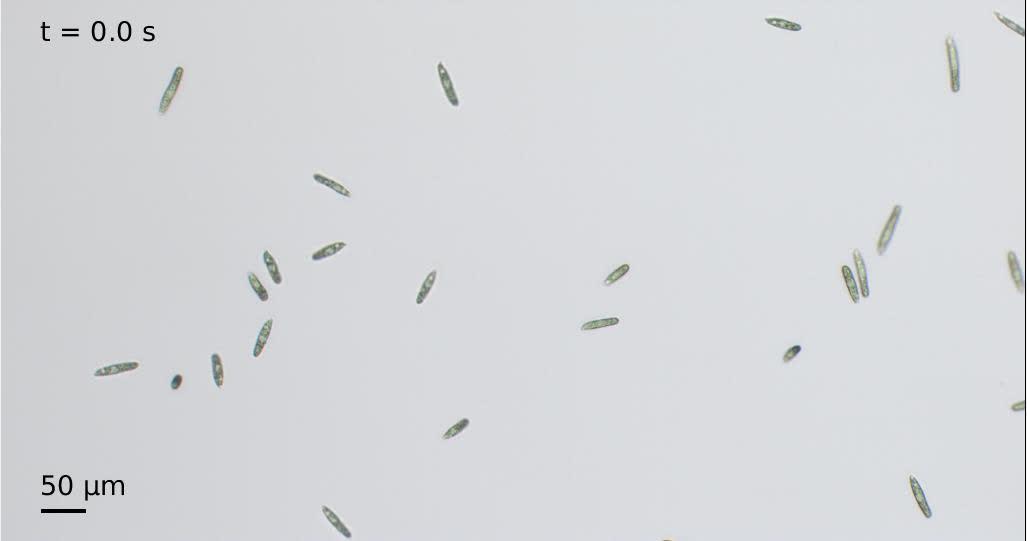 Kinematics of flagellar swimming in Euglena gracilis: Helical