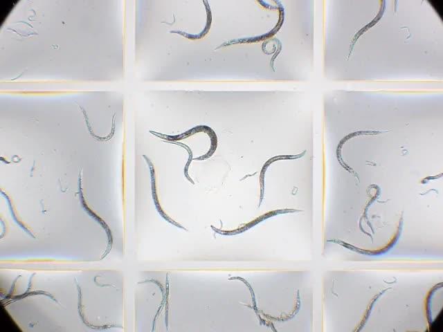 Microfluidic chambers using fluid walls for cell biology | PNAS