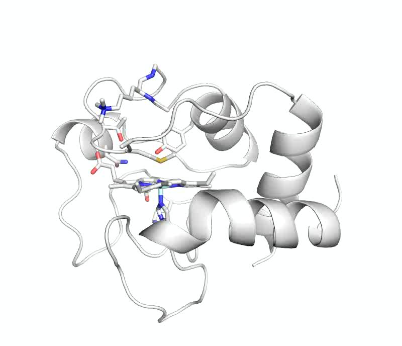 Structure Of A Mitochondrial Cytochrome C Conformer Competent For
