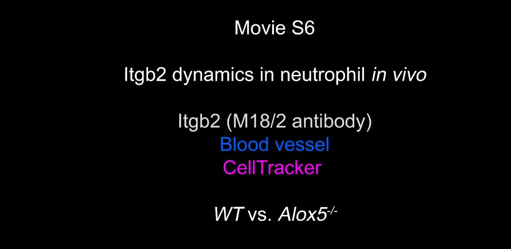 The LTB4–BLT1 axis regulates actomyosin and  2-integrin dynamics ...
